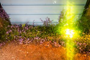 EXP glow-2