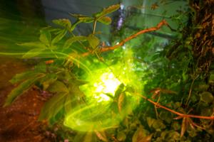 EXP glow-5