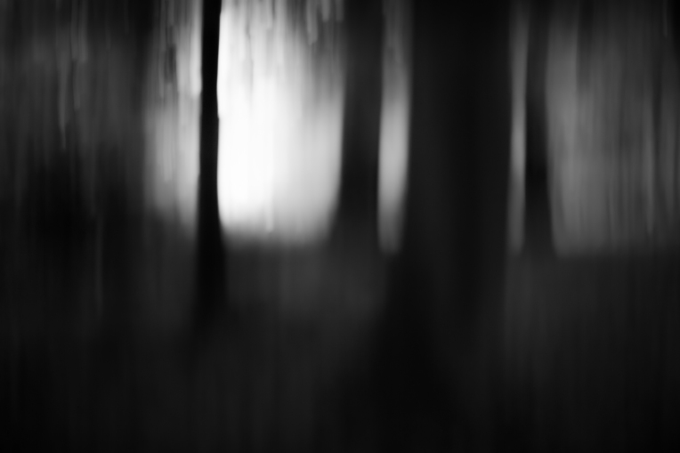 Moonlight (Intentional Camera Movement), Ashridge Estate