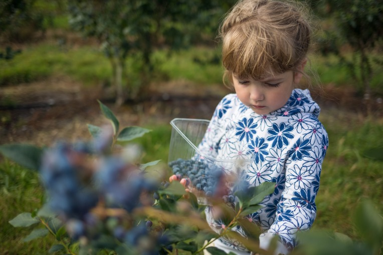 Canon 35mm f/2.0 IS - Girl picking blueberries