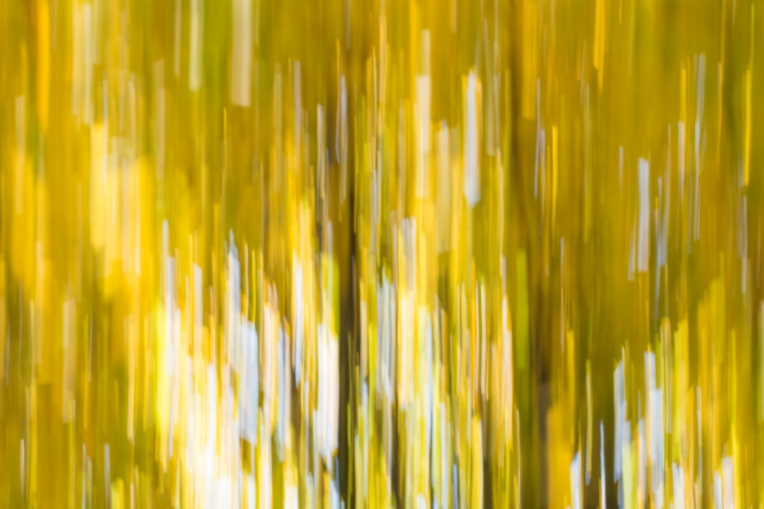 intentional-camera-movement-autumn-leaves-fast (1 of 1)