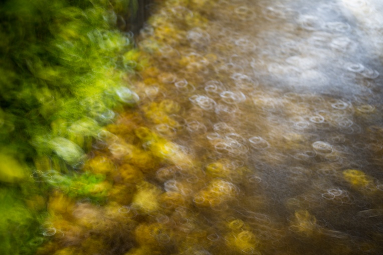 intentional-camera-movement-circular-leaves (1 of 1)